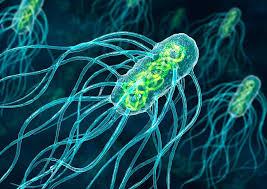 паразити в организма